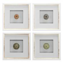 Uttermost 41550 - Uttermost Sea Urchins Shadow Box Art, S/4